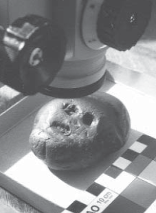 Though Australopithecus did collect a face rock, it preserves no information about who liked whom