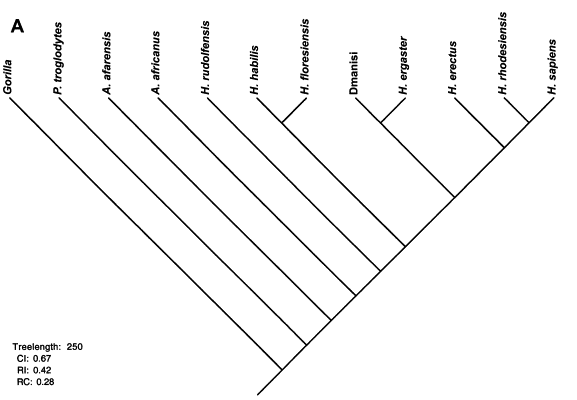 One possible family tree of the hobbit.