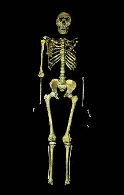 Homo erectus, usurped as the first migrator?