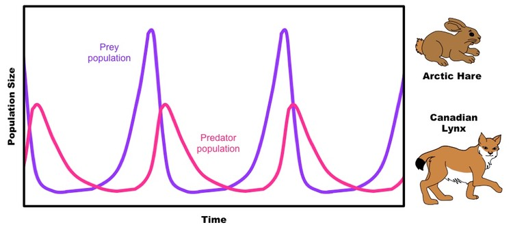 relationship of predator and prey population growth