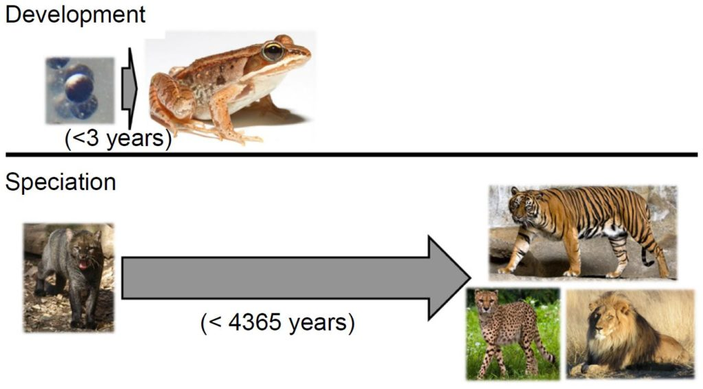 This is an actual figure from the actual paper. Figure 2 to be precise.