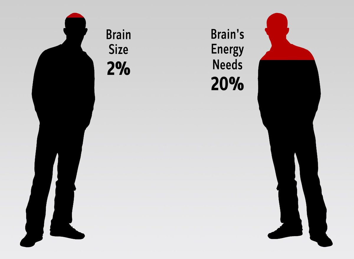 The Brain Uses How Much Energy From Food We Eat